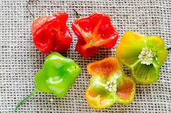 Colorful bell pepper. Rustic fabric Stock Photo