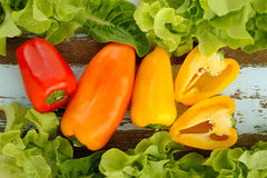 Colorful bell peppers stock images