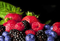 Colorful Berries Stock Images