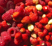 Colorful berry mix Stock Images
