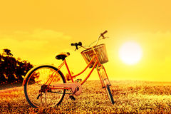 Colorful bicycle on flower field on sunset background Royalty Free Stock Image