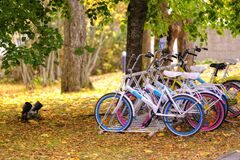 Colorful Bicycles In Sunny Autumn Park Royalty Free Stock Photo