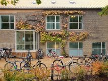 Fall facade Aarhus University, Denmark. Colorful bicycles and ivy leaves decorate a modernist yellow brick facade at Aarhus University, Denmark. Modern stock photos
