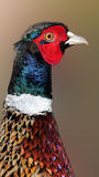 Colorful bird Royalty Free Stock Image