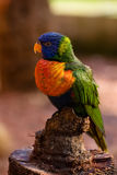 Colorful bird Stock Photo