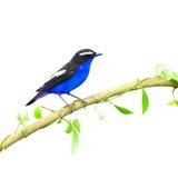 Colorful bird Royalty Free Stock Photo