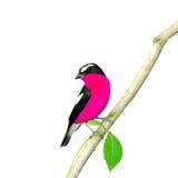 Colorful bird Stock Photos