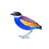 Colorful bird Stock Photo