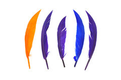 Colorful bird feather. On white background Stock Photography