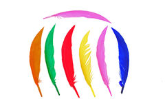 Colorful bird feather Stock Photos