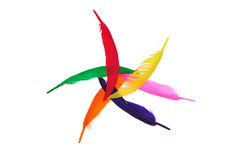 Colorful bird feather Stock Image