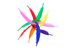 Colorful bird feather Royalty Free Stock Photography