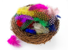 Colorful bird feather in nest isolated Royalty Free Stock Photos
