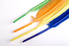 Colorful bird feathers Stock Photography