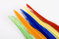 Colorful bird feathers Royalty Free Stock Image