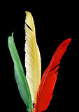 Colorful bird feathers Royalty Free Stock Images