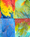 Colorful bird feathers collection pattern texture Royalty Free Stock Image