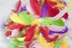 Colorful bird feathers. Pile of many colorful bird feathers stock image