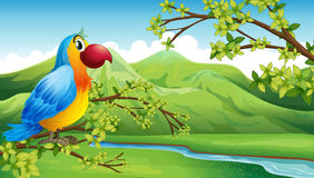 A colorful bird near the mountain Royalty Free Stock Photos