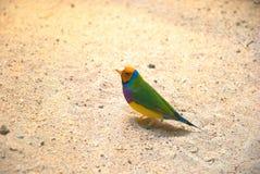 A colorful bird Royalty Free Stock Photos