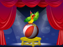 A colorful bird performing at the circus Royalty Free Stock Images