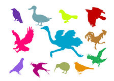 Colorful bird set. Set of different birds colorful silhouettes Royalty Free Stock Image