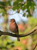 Colorful bird Royalty Free Stock Photos