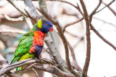 Colorful bird Stock Photos