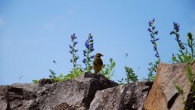 Colorful Bird. Small birds with prey in its beak standing on a rock between flowers Stock Photos