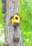 Colorful Birdhouse. Stock Images