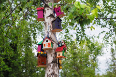 The colorful birdhouses. Beautiful colorful little birdhouses hanging in a tree royalty free stock photography