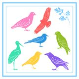 Colorful birds. Vector bird silhouettes. easy to change color Stock Photos