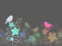 Colorful birds background Stock Photos