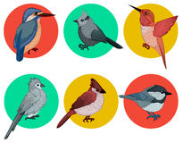 Colorful Birds. Different Birds. Set of Birds. Hand Drawn Stock Images