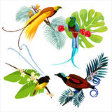 Colorful birds of paradise sitting on branches poster on white Royalty Free Stock Images