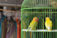 Colorful birds for sale at the bird market in Yogyakarta, Java, Indonesia. Royalty Free Stock Image