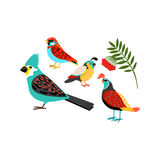 Colorful birds set Royalty Free Stock Photos