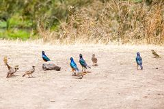 Colorful birds standing at the shore of an ancient lake stock image