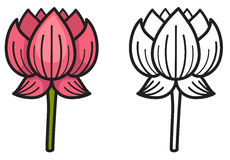 Colorful and black and white lotus for coloring book Stock Photos