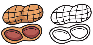 Colorful and black and white nut for coloring book. Illustration of isolated colorful and black and white nut for coloring book Royalty Free Stock Photography