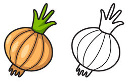 Colorful and black and white onion for coloring book Royalty Free Stock Photos
