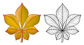 Colorful and black and white pattern chestnut leaf. Stock Image
