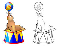 Colorful and black and white pattern seal in a circus. Royalty Free Stock Photo