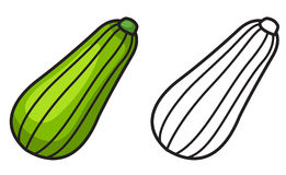 Colorful and black and white zucchini for coloring book Royalty Free Stock Image