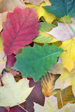 Colorful blanket of fallen leaves Royalty Free Stock Image