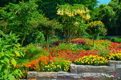 Colorful blooming flower bed at summer park Royalty Free Stock Images