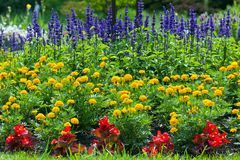 Colorful blooming  flower garden Stock Photos