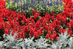 Colorful  blooming flowers in garden in summer Stock Images