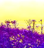 Colorful blooming flowers on yellow sky. Trendy creative minimal pop art design. Royalty Free Stock Photography