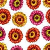 Colorful blooming gerberas Royalty Free Stock Photos